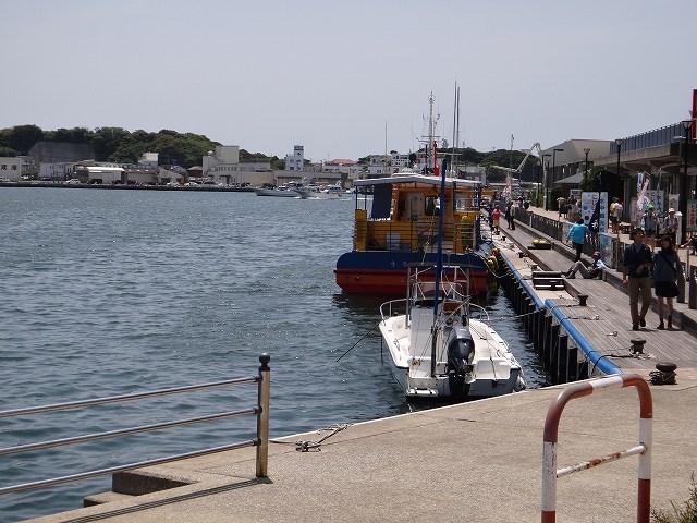 三崎港で魚釣り