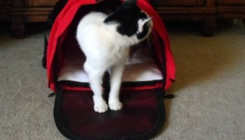 Make Your Pet More Comfortable When Traveling