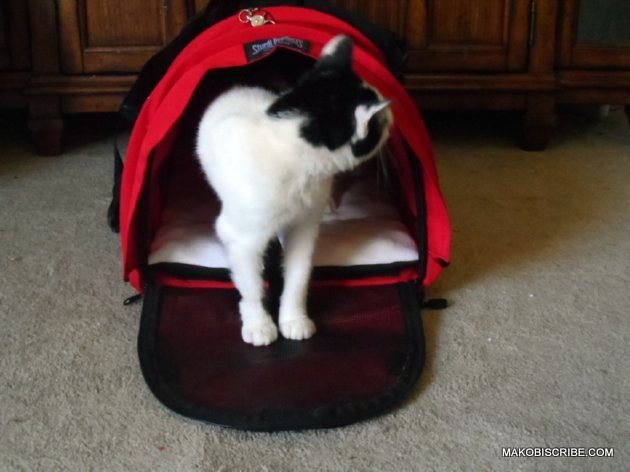 Tips To Make Your Pet More Comfortable When Traveling