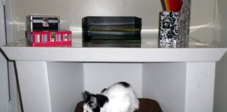 Tips To Organizing Your Desk At Home