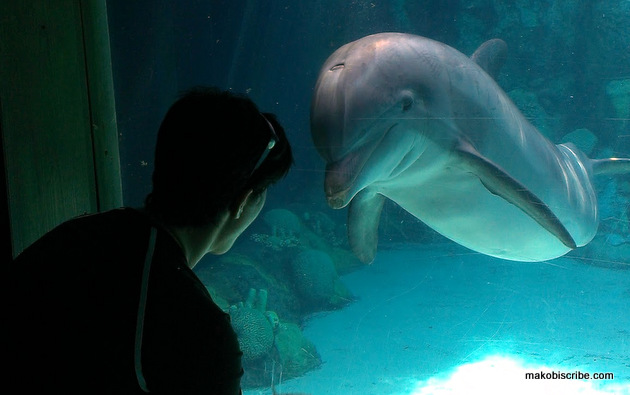 Playing with the dolphins in florida