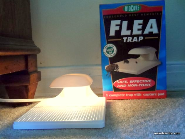 Using Natural Flea Control Instead Of Chemicals