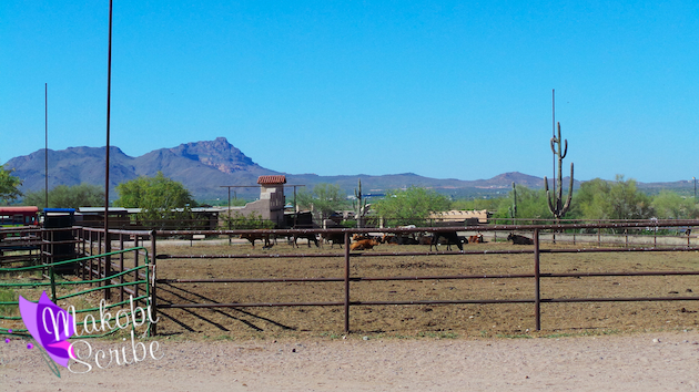 Enjoy The Desert Views Horseback Riding In Phoenix #BloggersGo