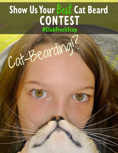 Cat-Bearding-Contest