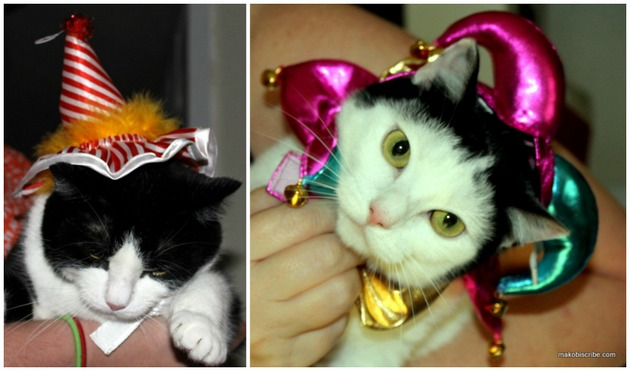 Popular Halloween Costumes For Pets For 2013