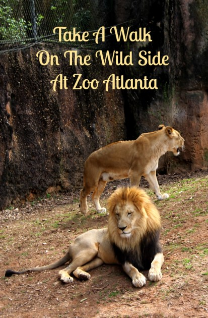 Take A Walk  On The Wild Side  At Zoo Atlanta