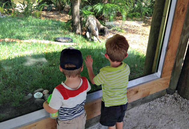 summer activities for toddlers boys at the zoo