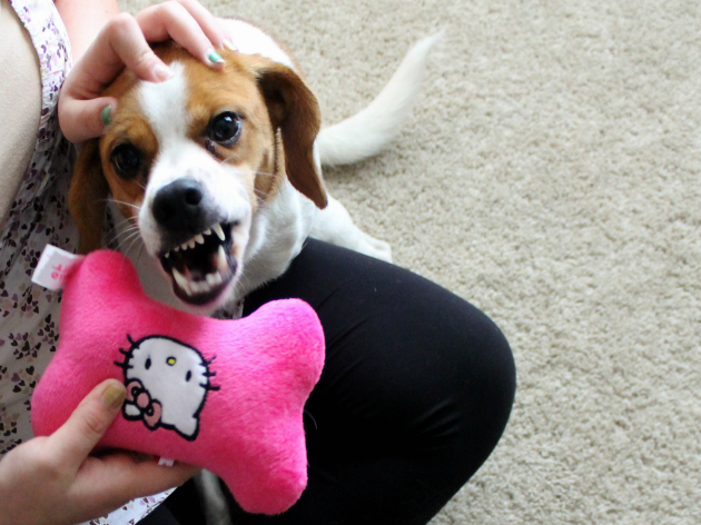 Halloween Safety Tips For Dogs