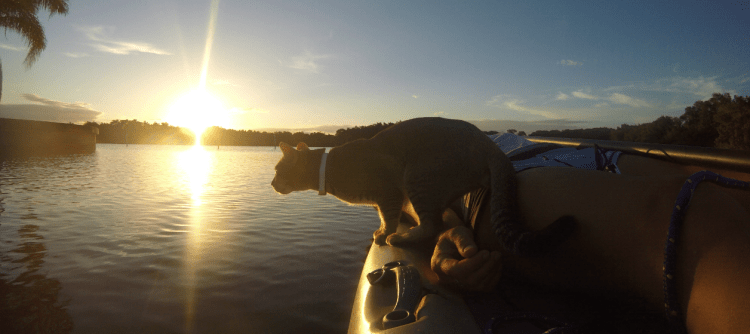 cat on river