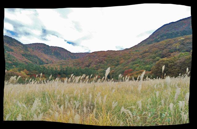 山とススキの対比