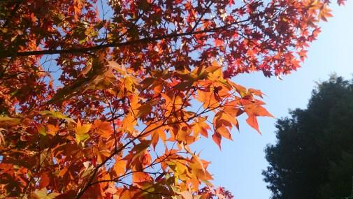 金華山麓公園の紅葉ベストショット
