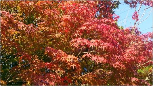 金華山麓公園の紅葉画面一杯