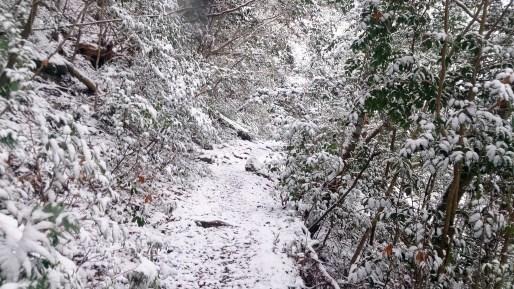 鳳来寺山の遊歩道雪景色1