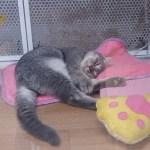アイキャッチ用ショップ猫用リアル写真01