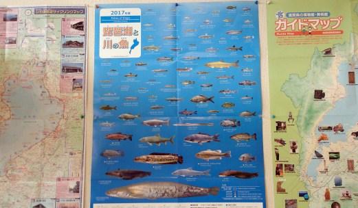 琵琶湖北水鳥公園の琵琶湖魚マップ