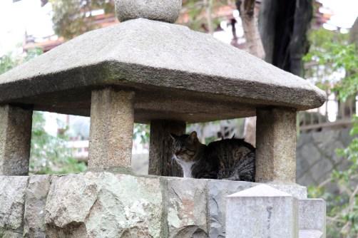 龍泉寺のネコ22