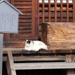 曼荼羅寺の賽銭箱と猫と看板