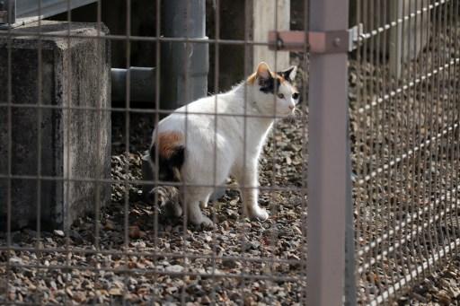 曼荼羅寺の柵の向こうの猫01