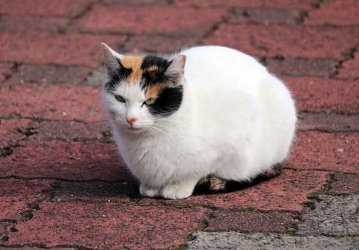 曼荼羅寺の座る猫アップ01