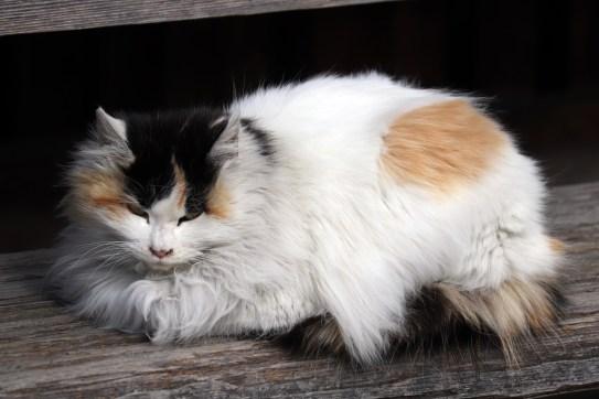 曼荼羅寺の木の階段と猫アップ