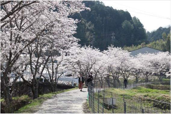奥山田桜4のトップ