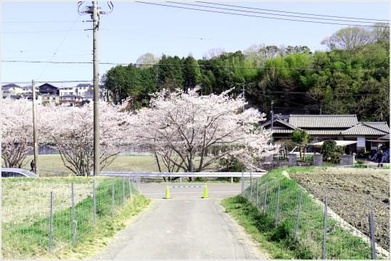 奥山田桜4の3-2