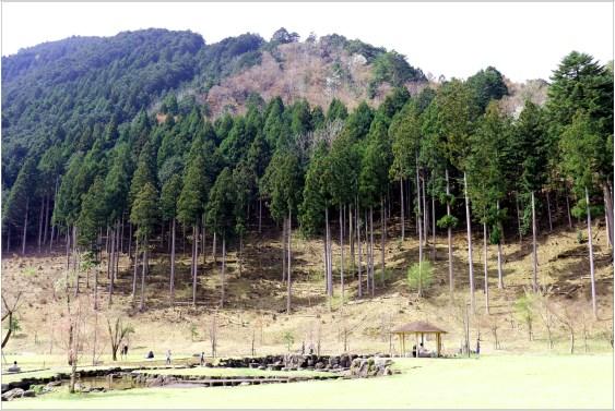 淡墨桜4の6-3公園裏の小山