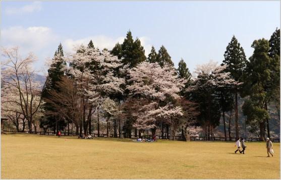 淡墨桜4の2-3公園