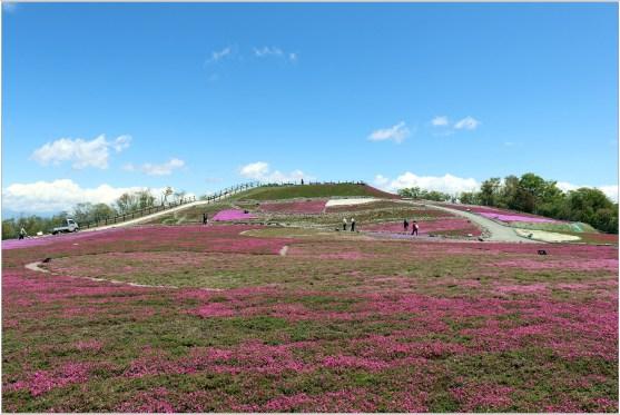 茶臼山4の3芝桜の丘