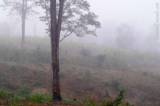 象の遊び場