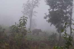 象がワイルドに見える。監視人が誰もいない。