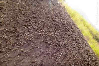 背中には土がかぶっている。