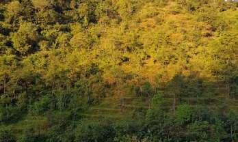 シンハ・タトパニ温泉の宿はどれ