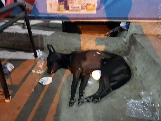 傍らで死んだように寝ている犬