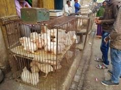 Rajgir のチキン売り