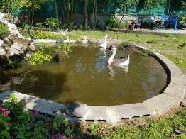池には鯉もいるのだが食べないようだ。