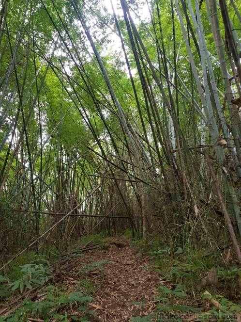 バンブー竹