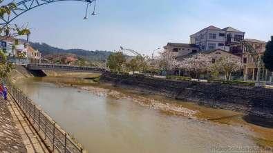 サムヌア市場の前の川。向こうに桜のような色の花