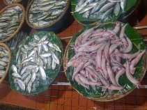 海に近いので魚が豊富