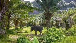 ホテルの裏は象の待機場だった