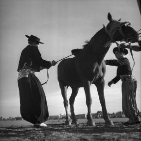 ARGENTINA. 1958. The Pampa. Gauchos training horses.