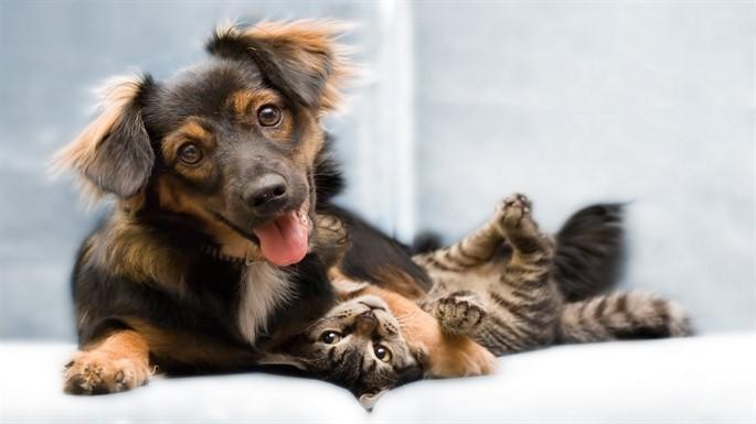 Tatile Giderken Evcil Hayvanlarınızı Güvenle Bırakabileceğiniz 6 Otel ve Pansiyon