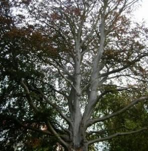 Ein großer Baum für die Fantasiereise.
