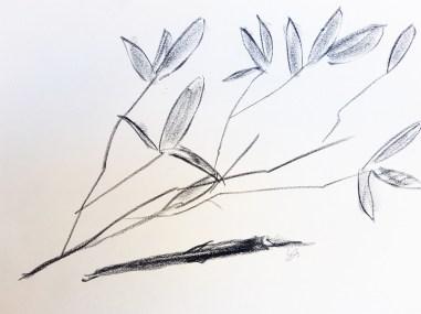 bambus-kohle-mal-atelier