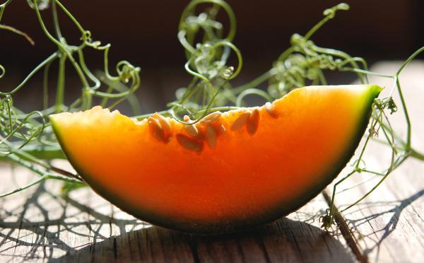 Melon cantaloupe 21