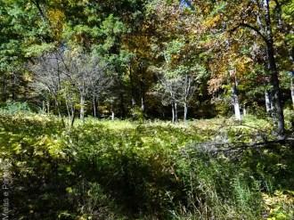Ann Arbor Nichols Arboretum