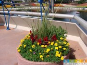 epcot flower and garden festival-7