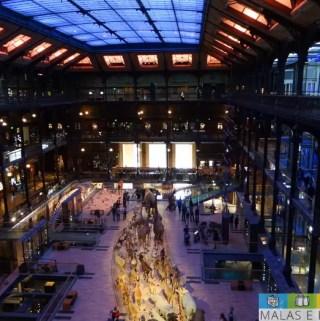 Grande Galeria da Evolução no Museu de História Natural em Paris