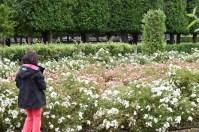Jardim do Palácio de Rosemborg