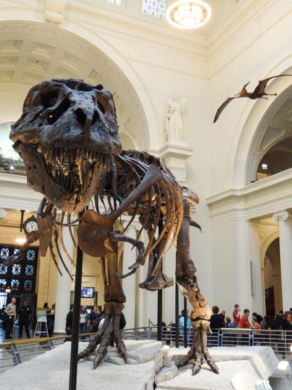 Chicago - Field Museum - Natural History Museum